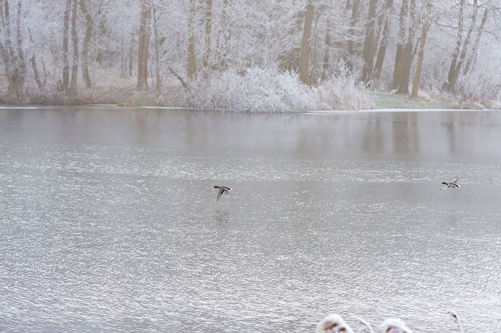 Tressower-See-Winter_14-2-enten
